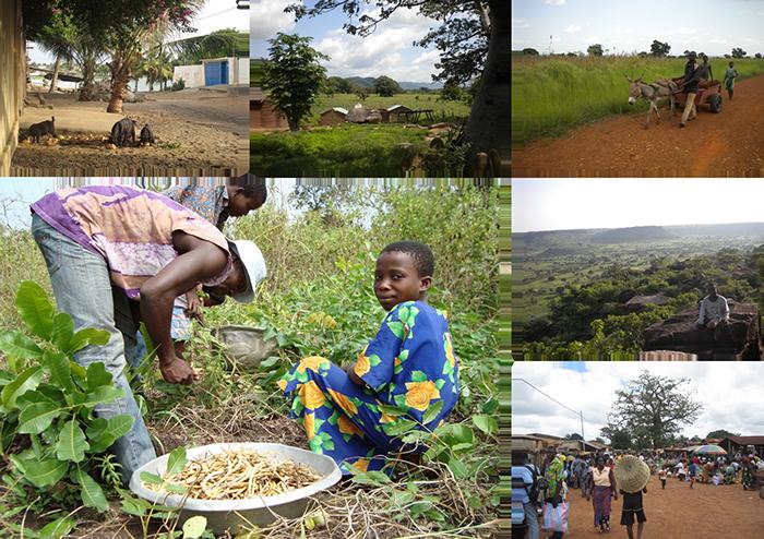 Scènes de vie au Togo